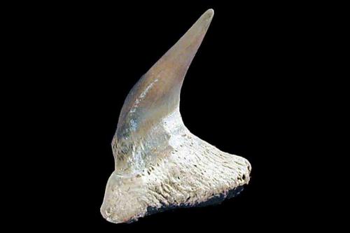 CartFish 1047
