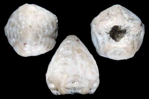 Crinoids 1394-96